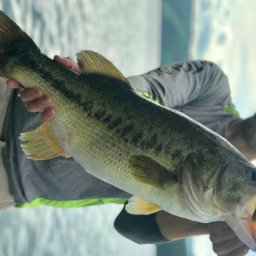 Ten Pound Bass